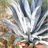 Agave and Friends