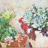 Potted Succulents 2nd in 2015 garden series