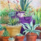 Potted Agaves 2015 first in garden series