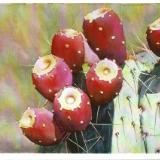 Fruit of the Desert